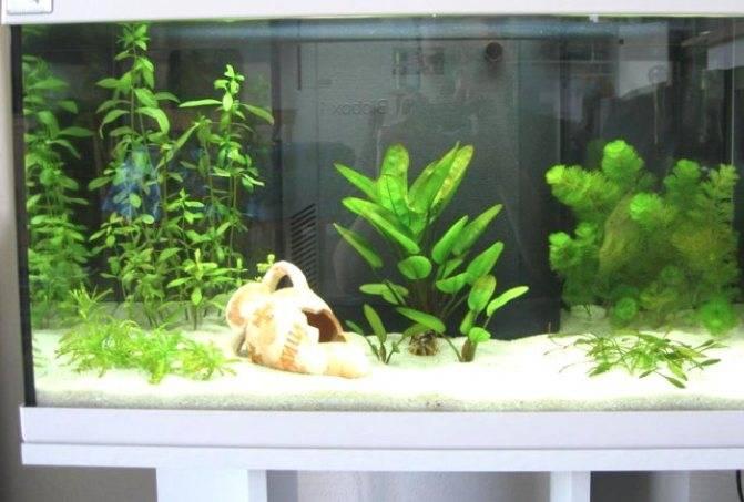 Узнайте, какую воду можно заливать в аквариум для рыбок