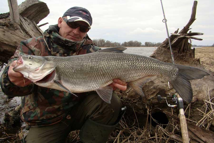 Способы ловли жереха: время рыбалки и оснастка