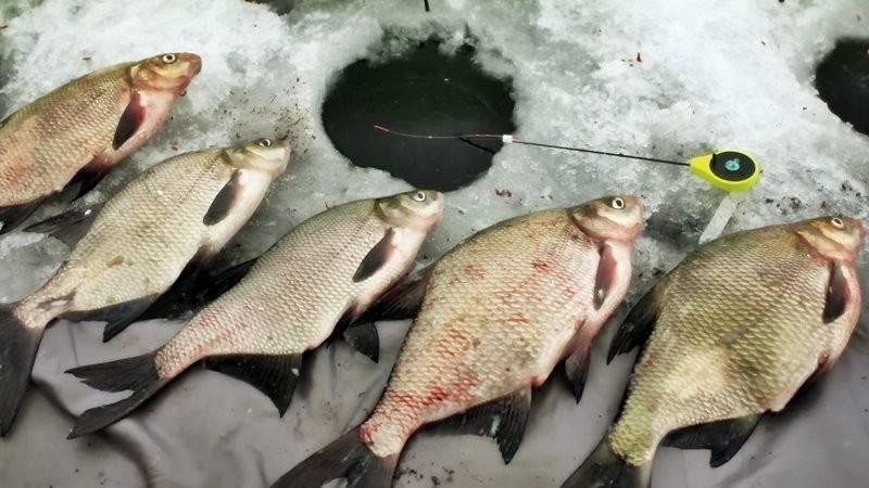 Ловля леща зимой: поиск, снасти, наживки и прикормка, советы
