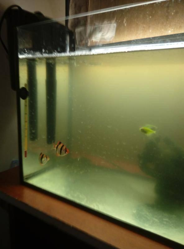 Мутнеет вода в аквариуме: почему возникает мутная вода, что делать, как бороться (избавиться), причины, методы