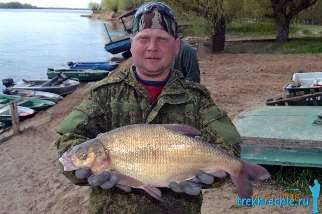 Ловля ахтубинского сома джиговыми приманками - рыбалка на ахтубе с комфортом - база трёхречье
