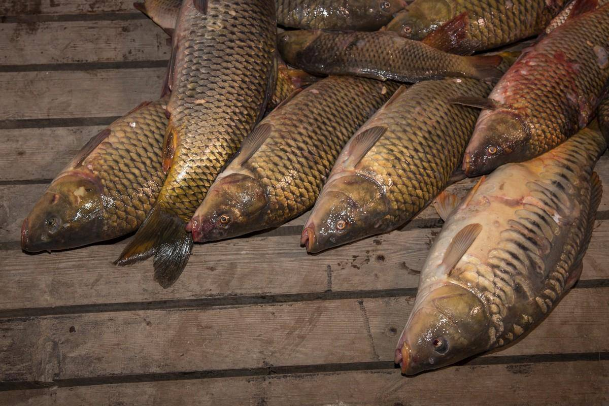 Рыболовно-охотничья база «юлта» — ещё один сайт на wordpress
