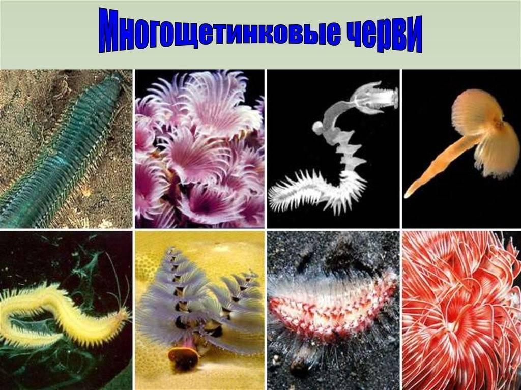 Нематоды - белые червячки в аквариуме что делать