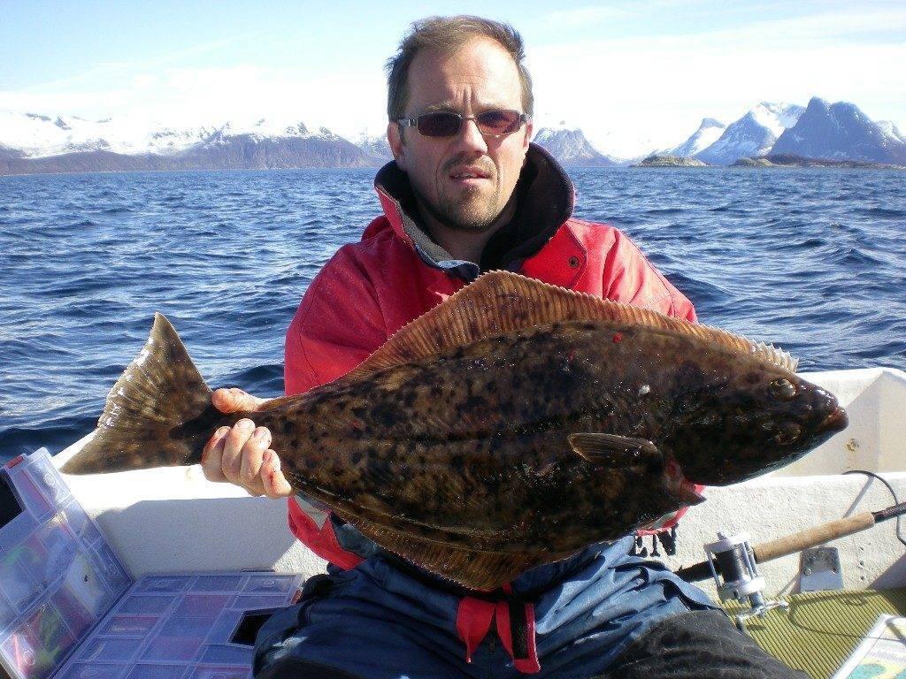Палтус: описание и фото рыбы, рацион, места обитания и способы ловли