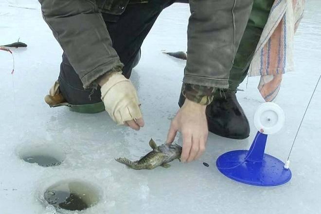 Ротан – страшно, но клево! самая уловистая рыбалка по первому льду