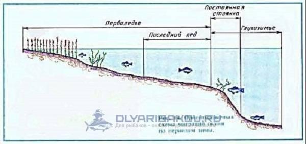Как и где искать рыбу на водоеме: поиск рыбы на реках, озерах и водохранилищах.