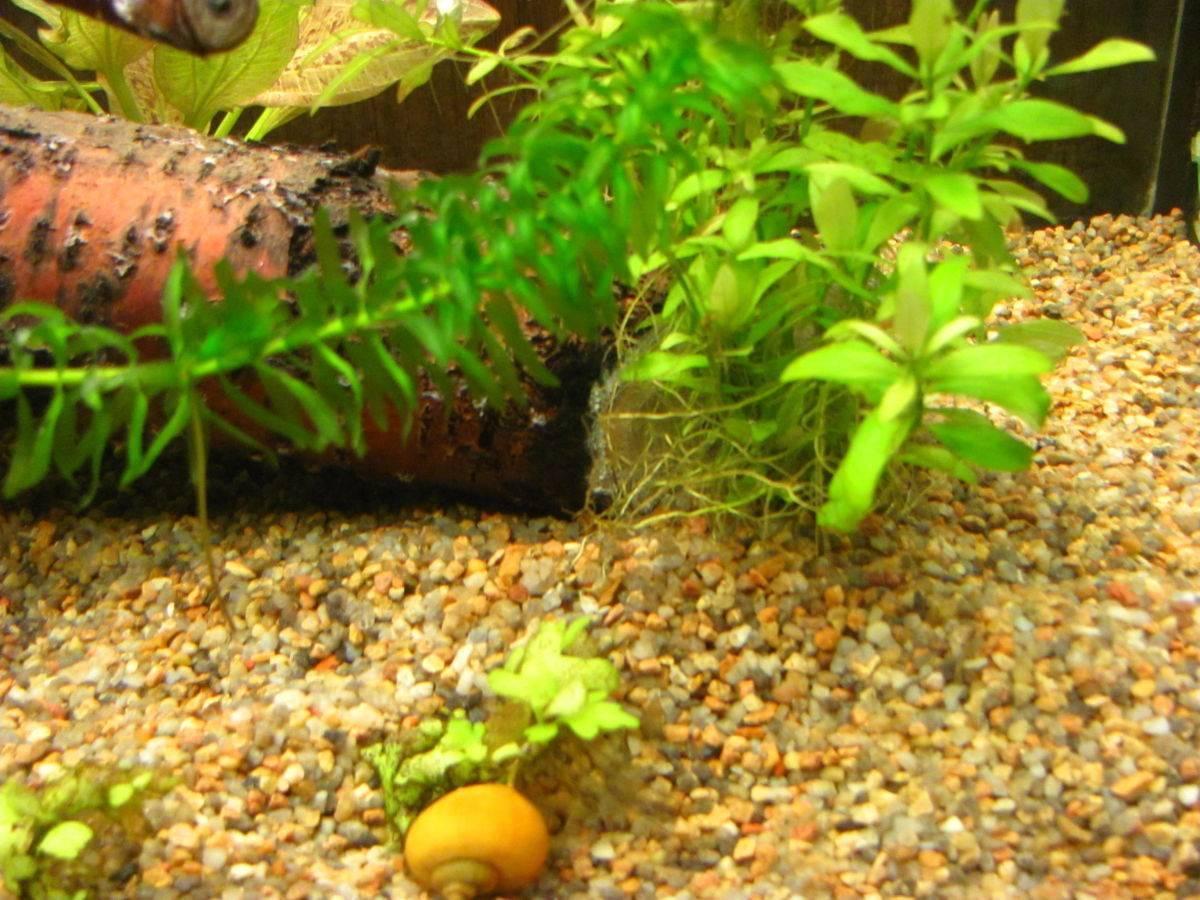 Какой грунт выбрать для аквариума - песок, гравий, галька, питательный для растений или черный с ценами
