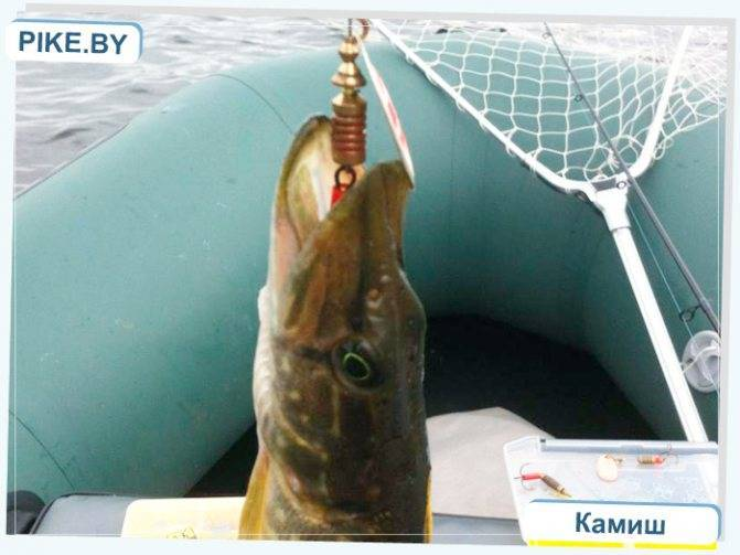 Платная рыбалка в щелковском районе