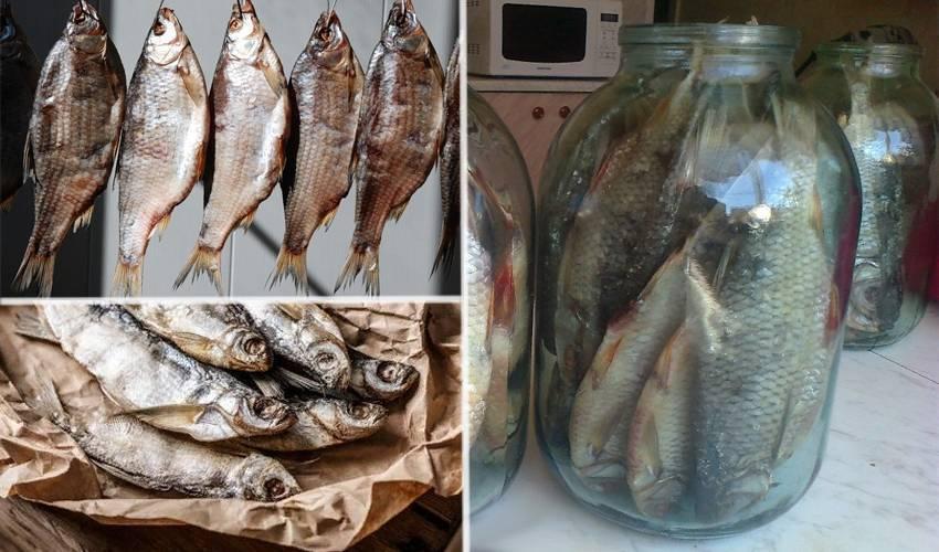 Рецепты вяленой плотвы
