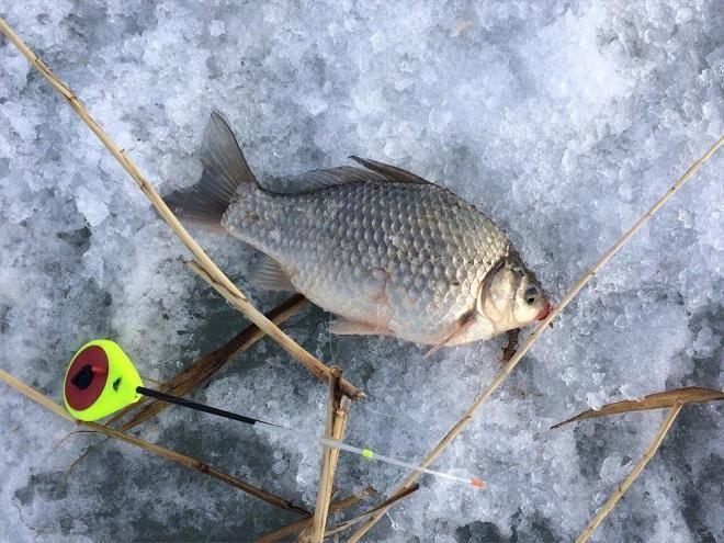 Ловля карася на мормышку зимой - на рыбалке!