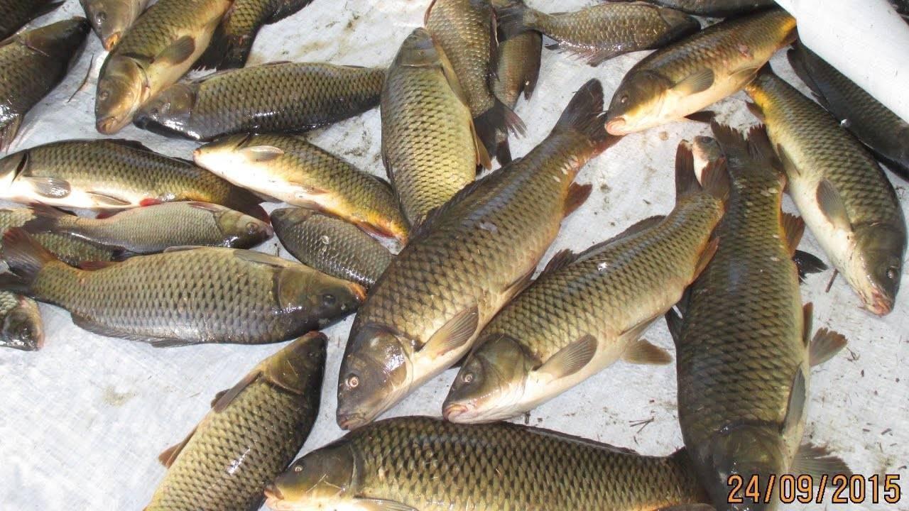 Рыбалка на ахтубе и бузане – сазан, сом, щука, судак, карп. с берега, с лодки, на квок.