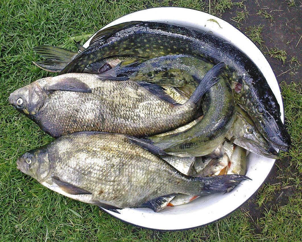 Рыбалка на ладожском озере.