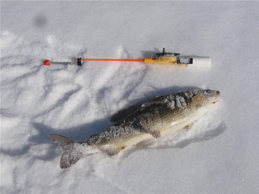 Ловля хариуса зимой: как ловить, варианты оснастки