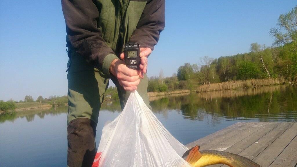Рыбалка в нижегородской области: топ рейтинг уловистых мест