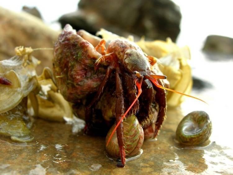 Рак отшельник и актиния. клоуны и актинии. наблюдаем за тайнами живой природы в аквариуме
