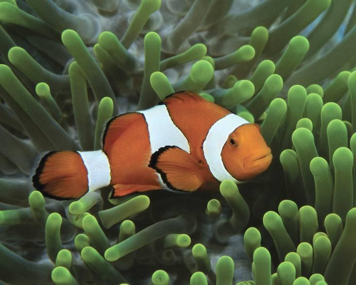 Как спят рыбы в аквариуме: спят ли рыбы, как спят рыбки, спят ли рыбы ночью, спячка, сон рыбы, спят ли рыбки в аквариуме