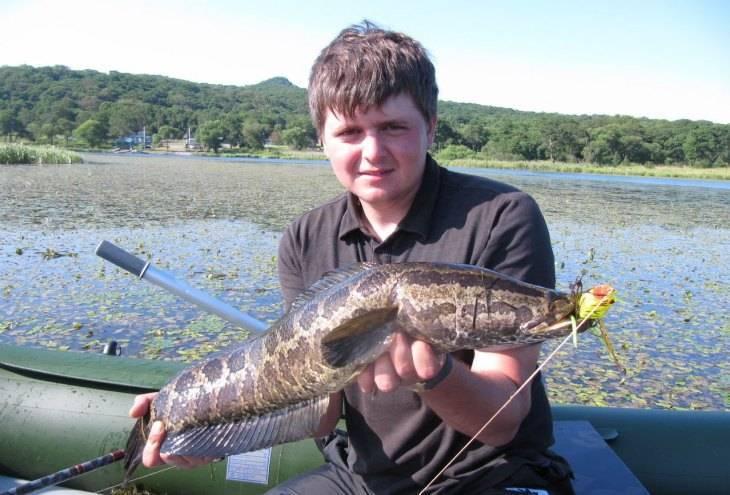Змееголов: 22 фото рыбы, описание, виды, содержание и уход