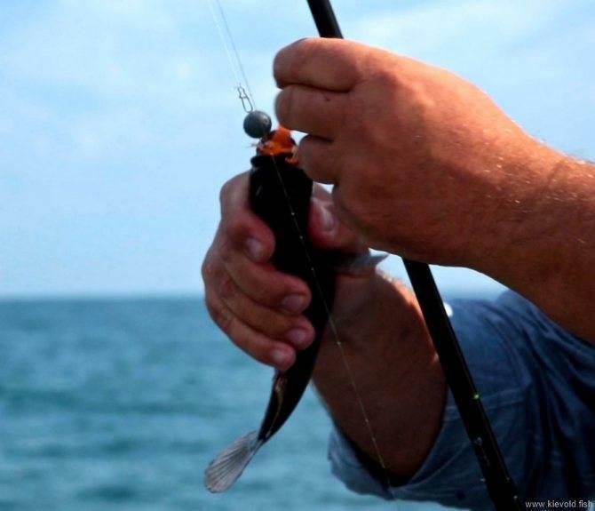 Где, на что и в какое время года ловить барабульку в чёрном море