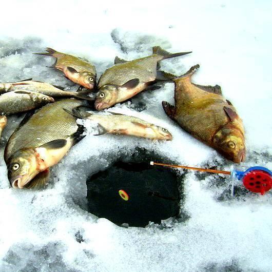 Ловля леща зимой: как поймать со льда, изготовление прикормки, выбор и оснастка удилища для успешной рыбалки