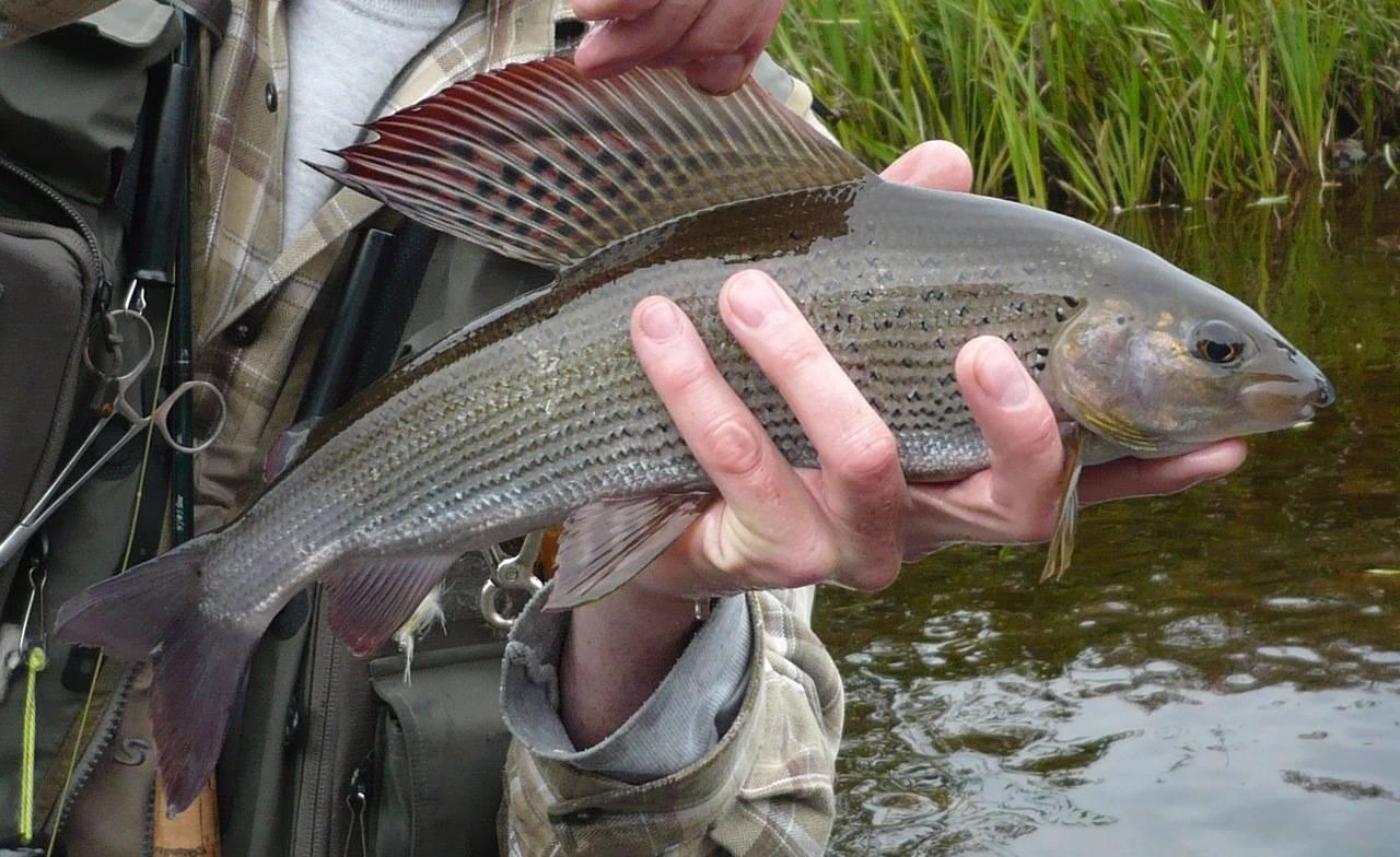 Телецкое озеро: факты, дорога, виды отдыха, рыбалка