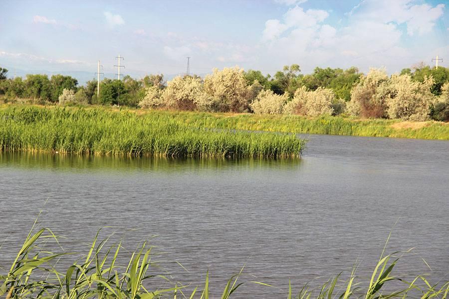 Алматы рыбалка на балхаше | список цены 2020 – realkz.com