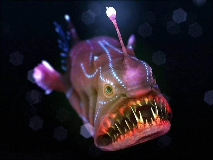Морской черт: как выглядит рыба европейский удильщик, где она обитает и чем питается