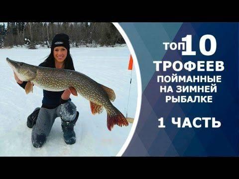 Рыбалка на тайменя: топ рыболовных мест желанных трофеев