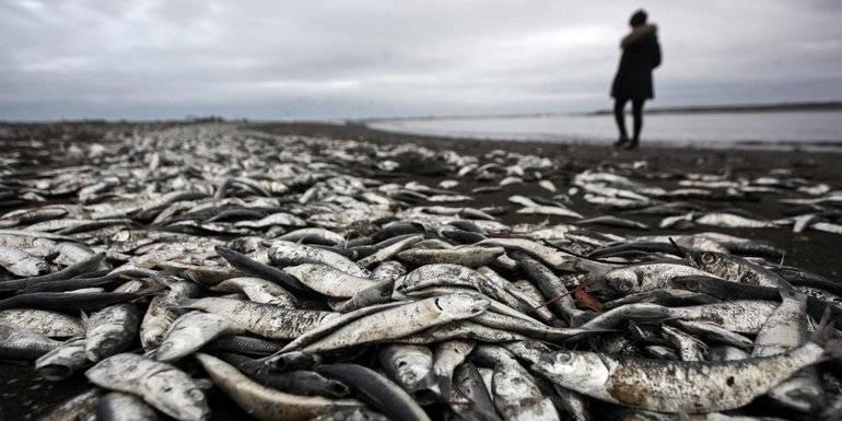 К чему снится сушеная рыба: 5 детальных толкований сна - сонник: сушеная рыба