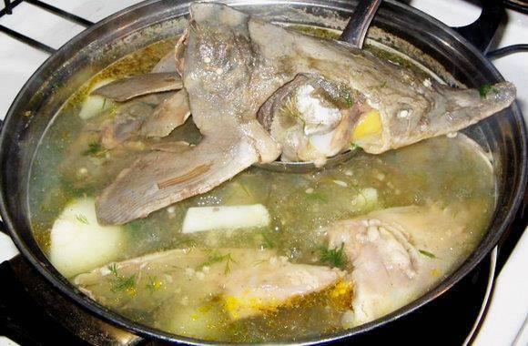 Уха из стерляди в домашних условиях: рецепты приготовления, как правильно сварить суп | berlogakarelia.ru