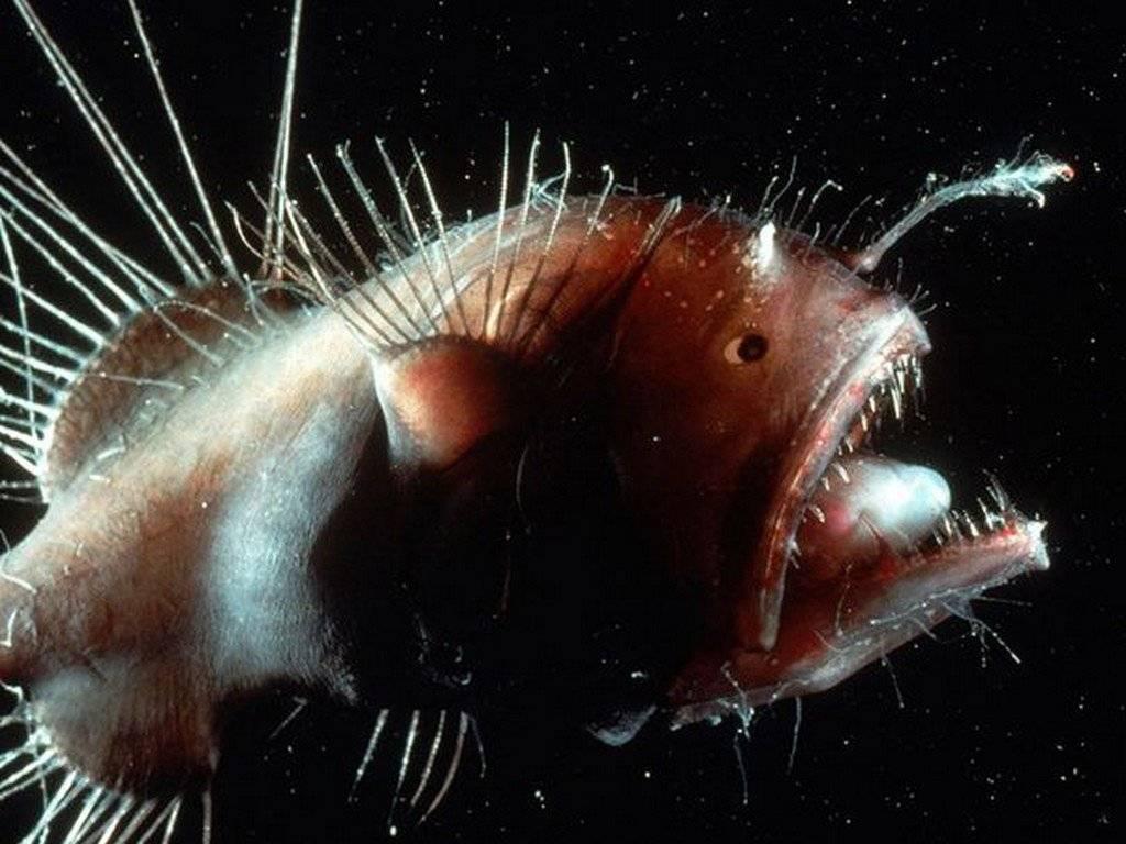 Самые страшные обитатели океана - топ 10, рейтинг, фото