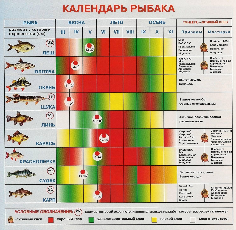 Когда ловится рыба: лучшее время и погода для рыбалки