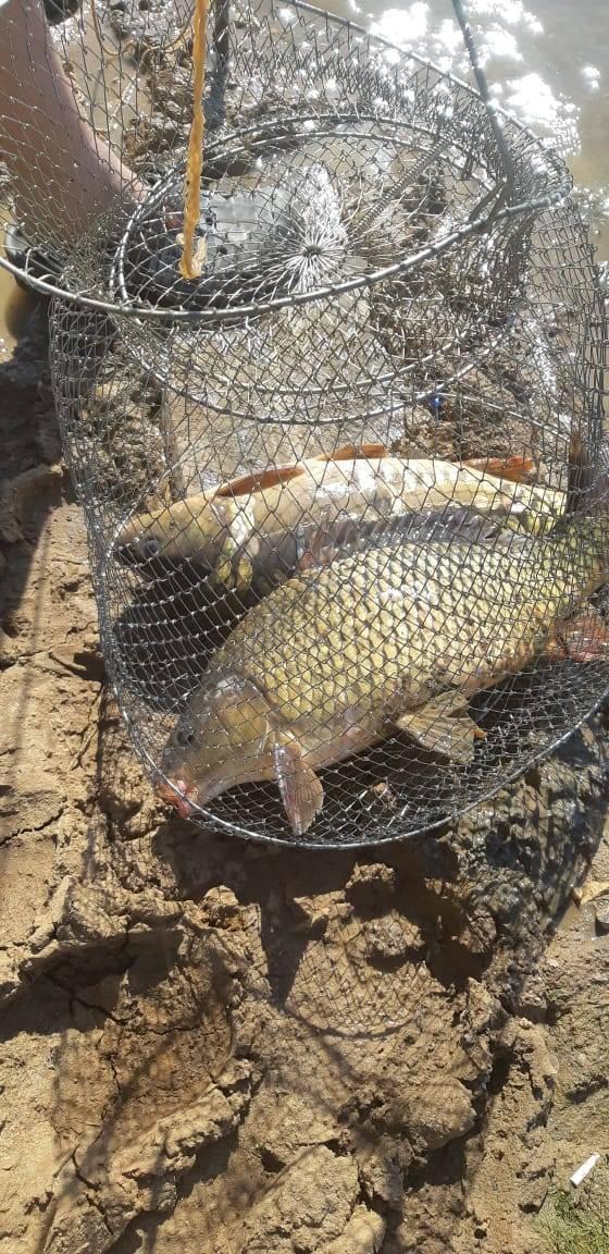 Рыбалка в подмосковье платно без нормы вылова