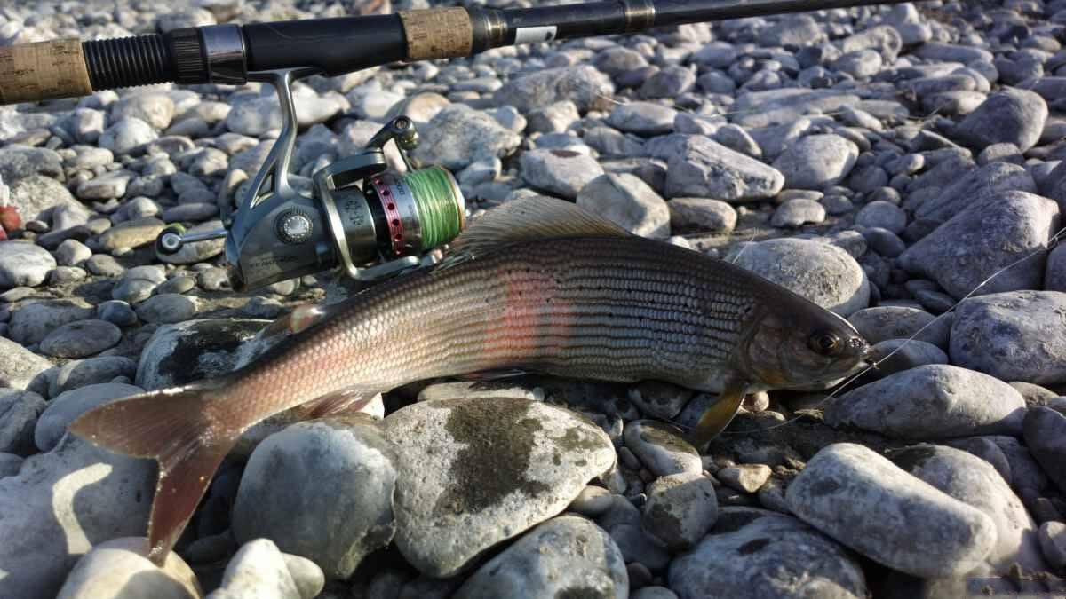 Рыбалка в иркутске и иркутской области: ловим хариуса и щуку на иркуте. как проехать на водохранилища? хорошая рыбалка на леща и другую рыбу летом