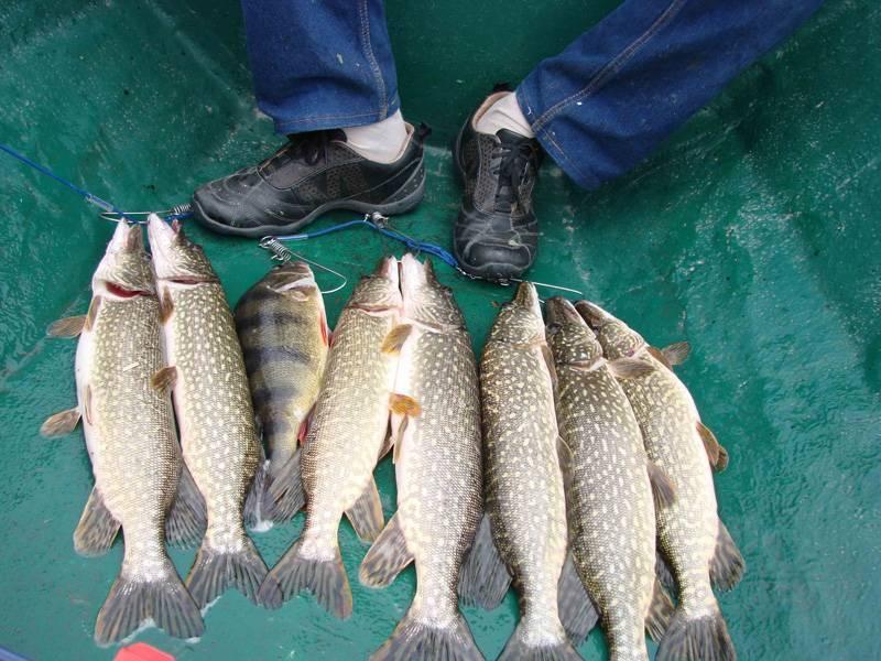 Рыбалка в брехово одинцовский район