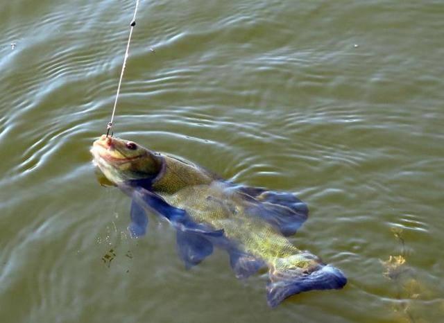 Особенности ловли линя на поплавочную удочку