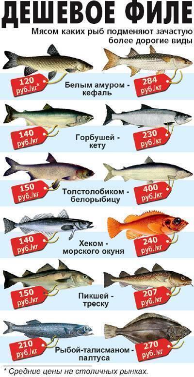 Как приготовить рыбу судак, рецепты приготовления на сковороде или в духовке