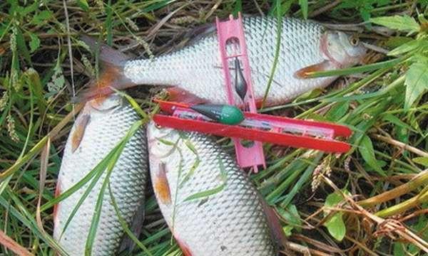 Лучшие наживки и приманки для ловли плотвы - на что и какие снасти ловить весной, летом и осенью, оснастки и прикормка