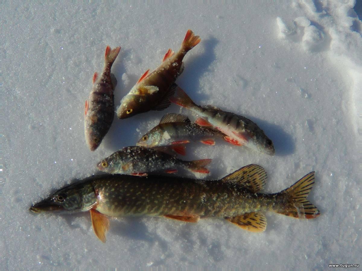 Рыболовный тур на енисее и его притоках - рыболовный тур