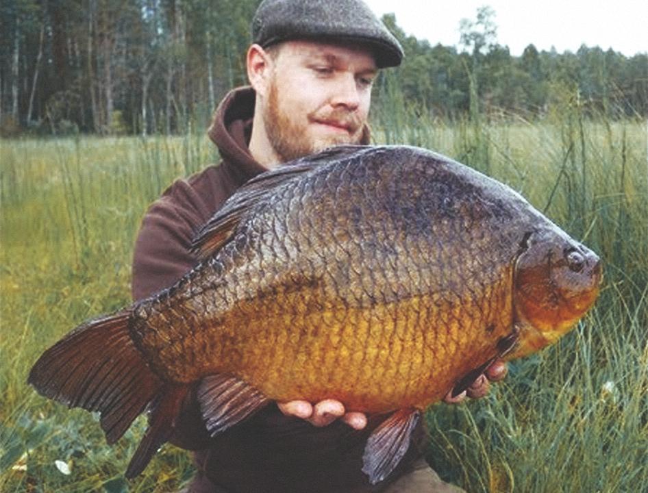 Рыба карась: описание и особенности искусственного разведения — cельхозпортал