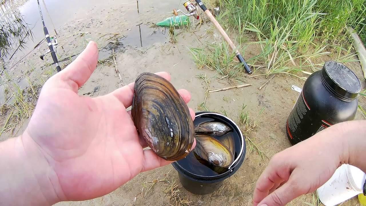 Ловля рыбы на ракушку