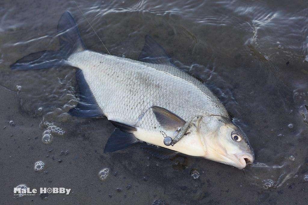 Рыбалка в люберецком районе