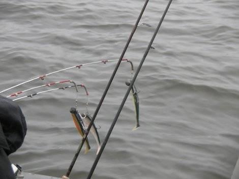 Ловля рыбы троллингом для начинающих (приманки, техника и тактика, особеннности водоемов) | lovitut.ru (рыбалка и бильярд) | яндекс дзен