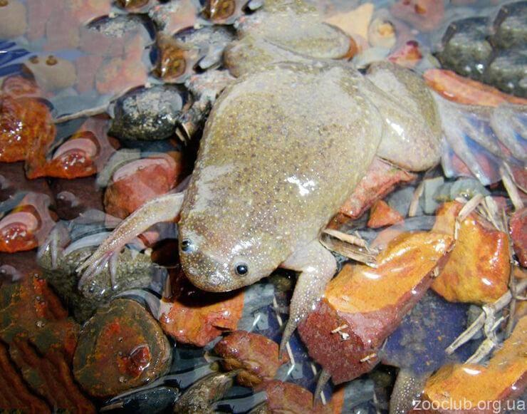 Артемия салина: общие сведения, применение ракообразного, использование artemia salina в аквариумах
