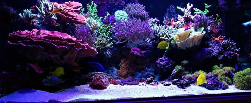 Как запустить дома морской аквариум