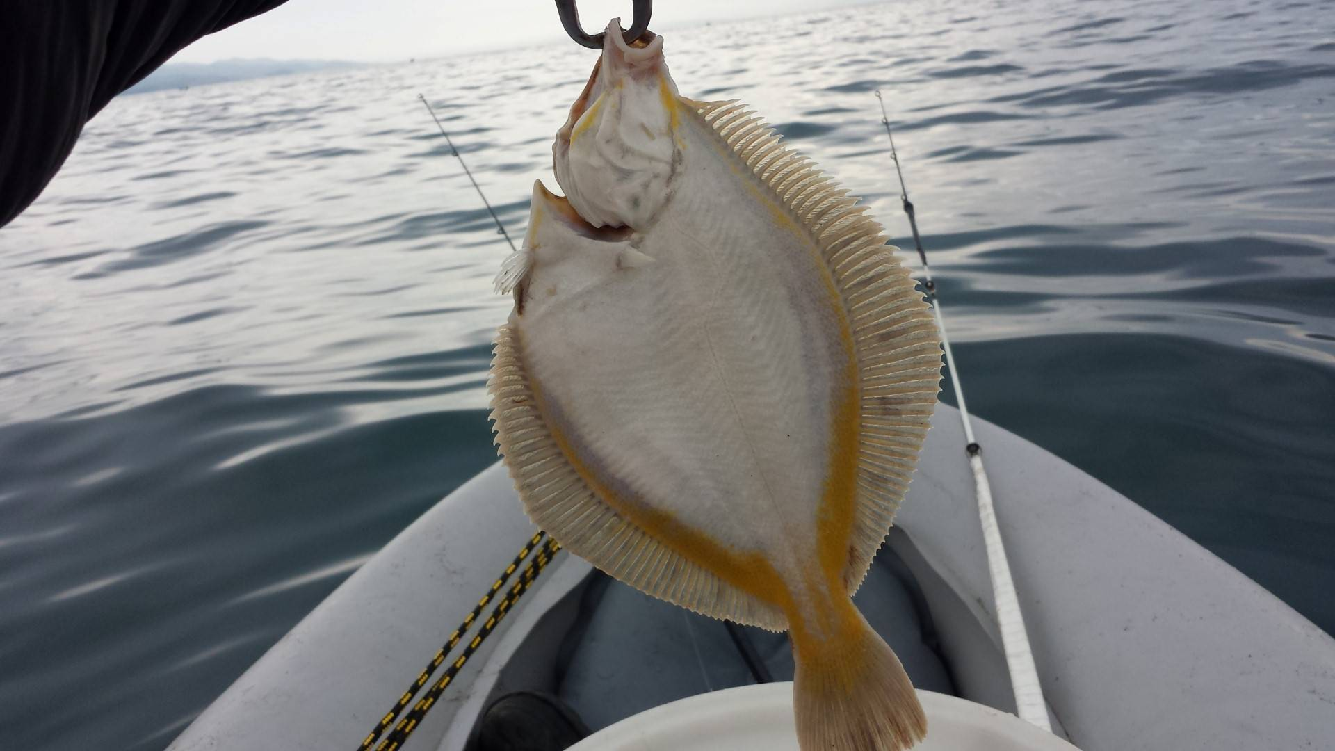 Камбала - морская рыба или речная?