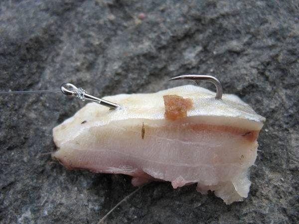 Снасти для ловли осетра на платнике - рыболовные подборки