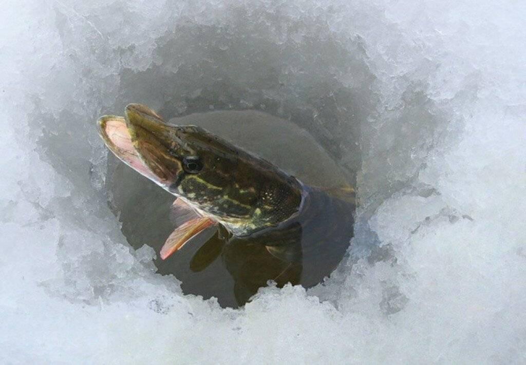 Ловля с поверхности воды. справочник рыболова