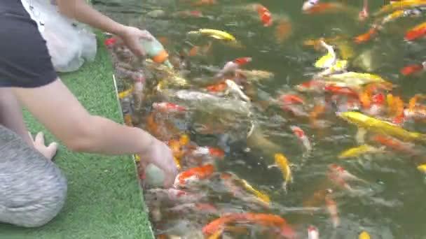 Рыба для маленького пруда на даче, какой породы разводить, чем лучше кормить и как ухаживать