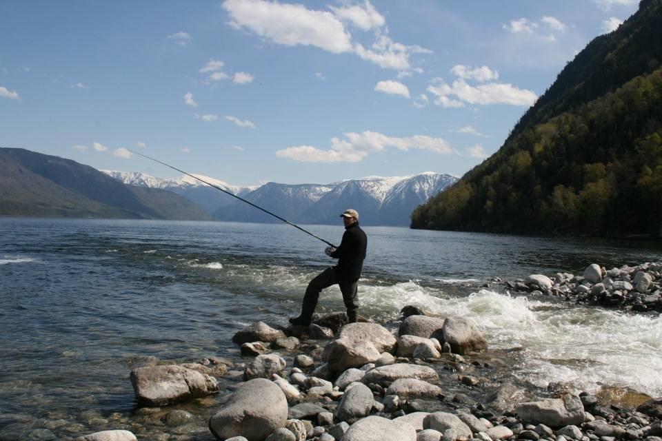 Рыбы телецкого озера - алтай туристский. туристический портал