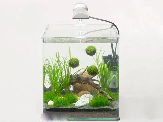 Дно морское на… стене: настенные и встроенные в стену аквариумы (фото)